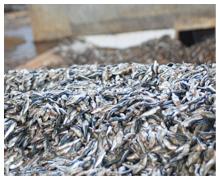 Fishmeal-01